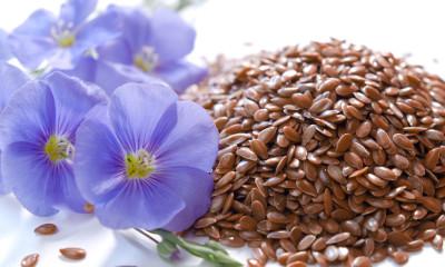 linum usitatissimum l. / blue lin blooms and seeds / horizontal / white background