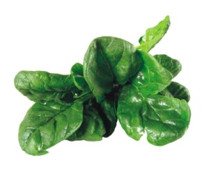 Spinach leaves are high in natural folate